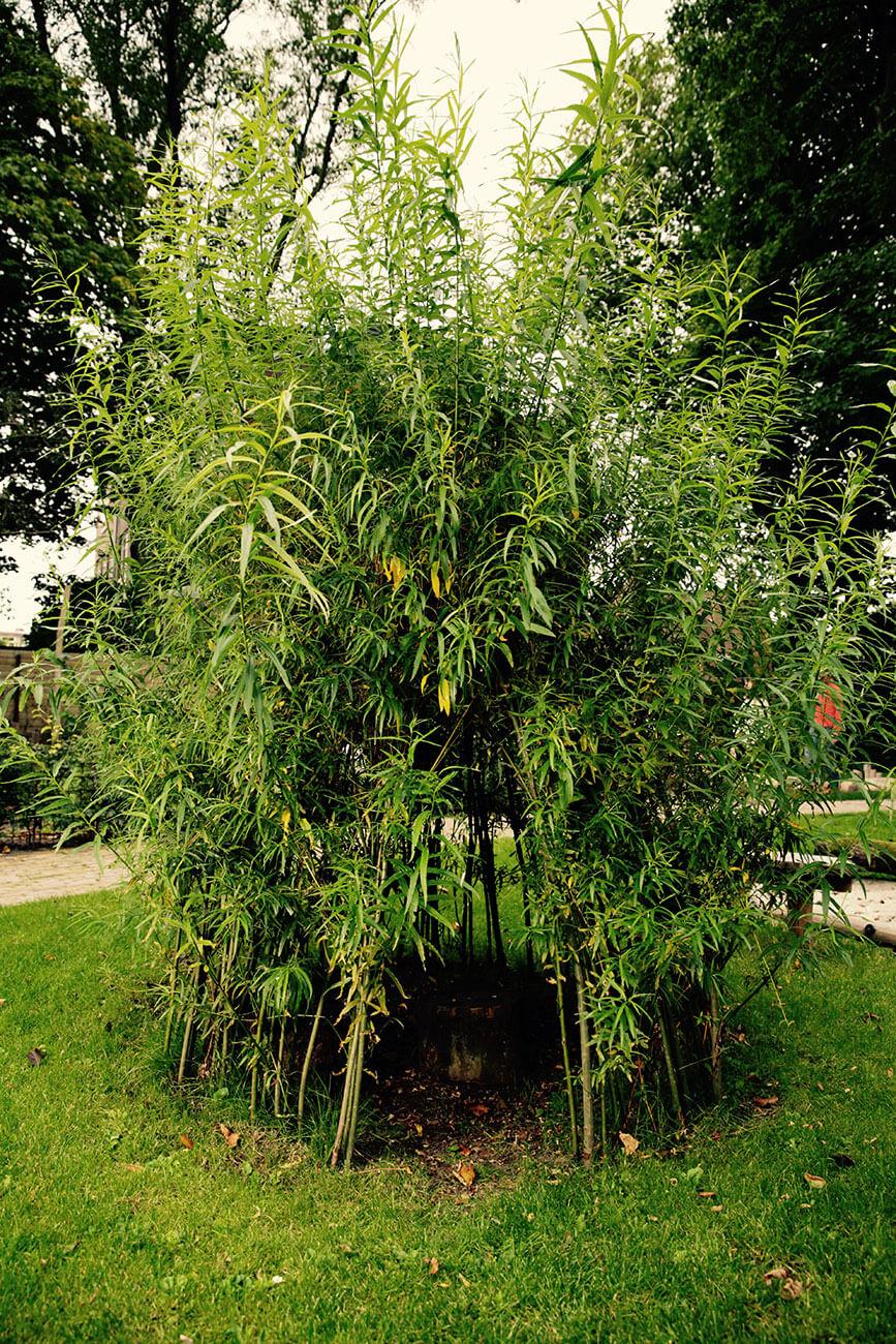 bamboo natuurspeeltuin